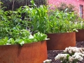 corten-garden-rings-for-planter-beds