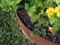 pre-made-circles_2_steel-garden-rings-jamie-duries-personal-backyard-1