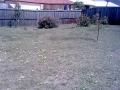 designer_landscape_transformation_with_steel_edging_14 - garden edging | Metal Garden Edging | lawn edging | landscape edging |  garden design