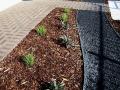 designer_landscape_transformation_with_steel_edging_8 - garden edging   Metal Garden Edging   lawn edging   landscape edging    garden design